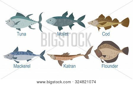 Collection Of Fish Species With Name Subscription, Tuna, Mullet, Cod, Markel, Catran, Flounder Vecto