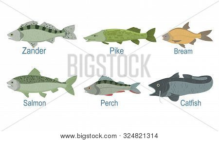 Collection Of Fish Species With Name Subscription, Zander, Pike, Bream , Salmon, Perch, Catfish Vect