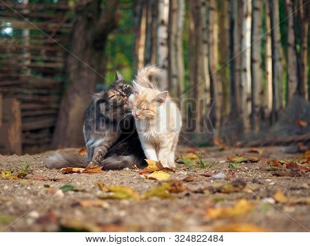 A Cat Lovingly Licking The Kitten. Autumn, Fallen Leaves, Sun. The Backdrop Of The Rustic Fence