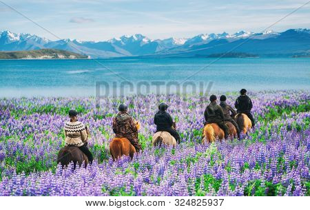 Travelers Ride Horses In Lupine Flower Field, Overlooking The Beautiful Landscape Of Lake Tekapo In