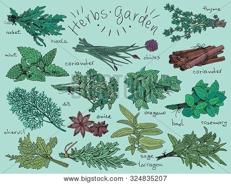 Herbs, Basil, Chervil, Chives, Cilantro, Coriander, Dill, Mint, Oregano, Parsley, Rosemary, Rocket,