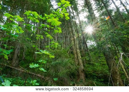 Sun Star Between The Forest Trees