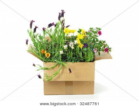 Flowers In A Parcel