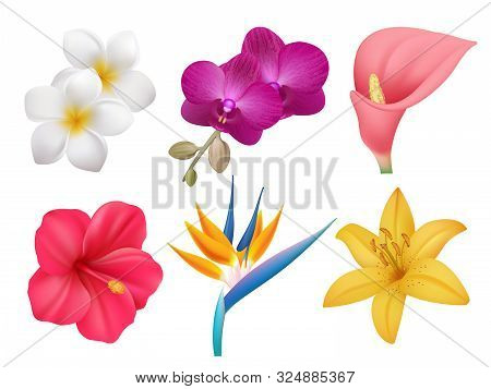 Tropical Plants. Leafs And Exotic Bouquet Botanical Nature Collection Of Realistic Flowers Isolated.