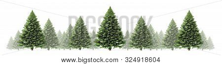 Pine Tree Horizontal Winter Border Design With A Group Of Green Christmas Trees On A White Backgroun