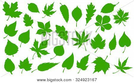 Tree Green Leaves Isolated Silhouette Icons. Vector Forest Trees Leaf Of Maple, Rowan Or Chestnut An