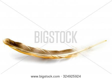 Bird Feather Isolated On A White Background
