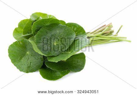 Closeup Leaf Of Gotu Kola, Asiatic Pennywort, Asiatic Leaf Isolated On White Background