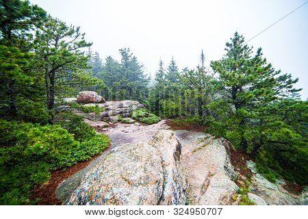 Hiking Path Along Granite Rocks And Pines On Foggy Day At Acadia National Park, Maine, Usa