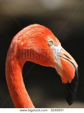 Stock Flamingo 2
