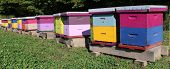 Row of brightly colored wooden bee hive boxes on a sunny fall day with bees buzzing around with some laying dead on floor poster