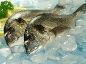 Two raw dorado fish on seafood stall poster