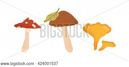Autumn Edible And Inedible Mushrooms. Birch Boletus, Fly Agaric And Chanterelle. Fresh Fall Forest F