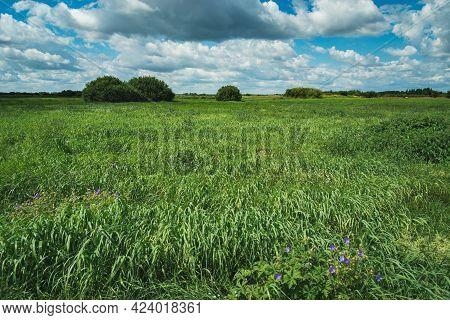 Green Meadow With Tall Grass And Clouds At The Sky
