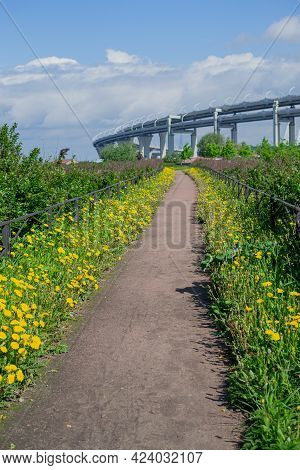 Walking Straight Path In The Middle Of A Field Of Grass With Blooming Yellow Dandelions Behind A Sma
