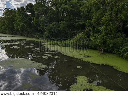 The I&m Canal Water Way Is Stagnant Without Much Flow And Grows A Healthy Population Of Duckweed Eve