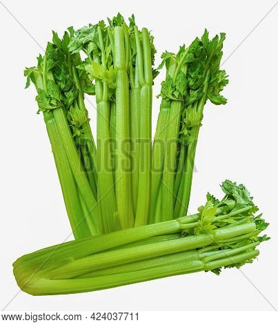 Three Upright And One Laid Celery Sticks. Long Stalks Of Celery With Few Leaves On Top.