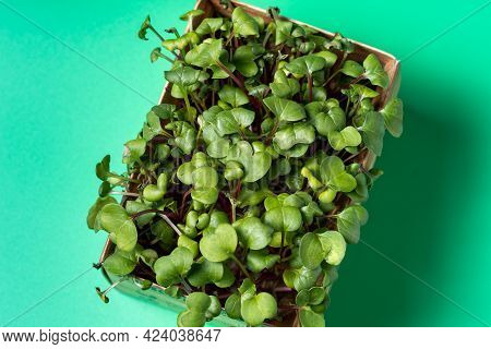Micro-greens In A Tray For Growing In A Cardboard Box. Sale And Delivery Of Micro Green Plants.