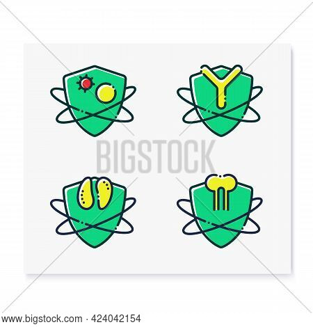 Immune System Color Icons Set. Immunology Concept. White Blood Cells, Antibodies, Thymus, Bone Marro