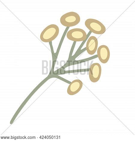 Yellow Chamomile Wildflower Hand Drawn Vector Illustration Isolated On White.