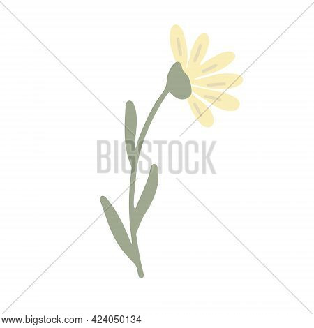 Yellow Wildflower Hand Drawn Vector Illustration Isolated  On White.