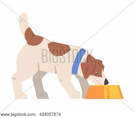 Jack Russell Terrier Eating Food From Bowl, Cute Pet Animal With Brown And White Coat Cartoon Vector