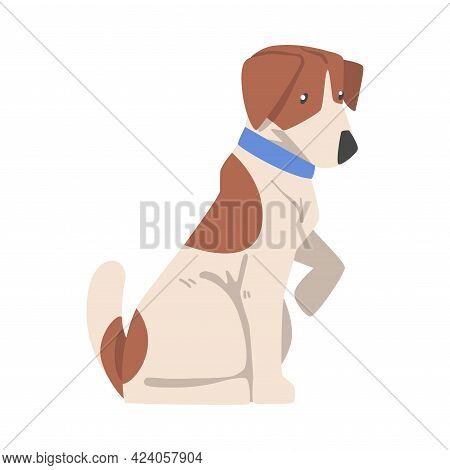 Jack Russell Terrier Giving Its Paw, Cute Pet Animal With Brown And White Coat Cartoon Vector Illust
