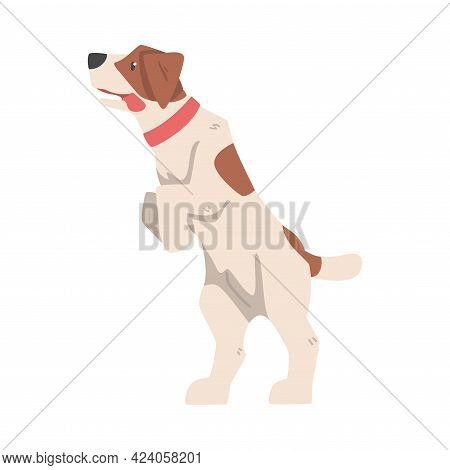 Friendly Jack Russell Terrier Standing On Its Hind Legs, Cute Pet Animal Cartoon Vector Illustration