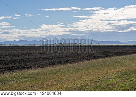 A Field Of Flowering Sugar Cane Ready For Harvest Beside Fallow Ground With A Grassy Verge In The Fo