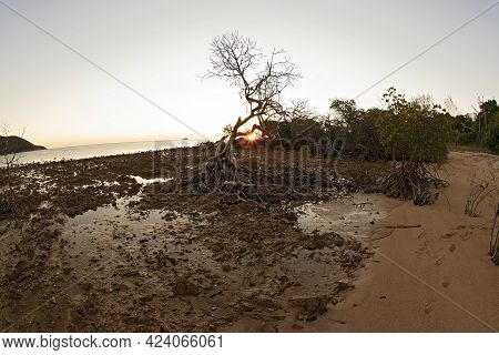 The Landscape Lightens As The Sun Rises On A Rocky Mangrove Beach At Low Tide And Casts An Orange Gl