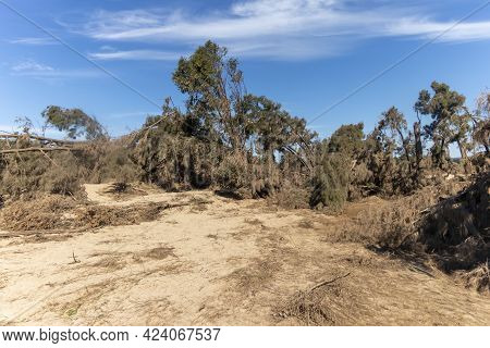 Photograph Of Fallen Trees After Severe Flooding In Yarramundi Reserve In The Hawkesbury Region Of N