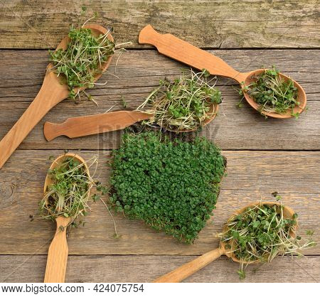 Sprouted Green Sprouts Of Chia, Arugula And Mustard In A Wooden Spoon On A Gray Background From Old
