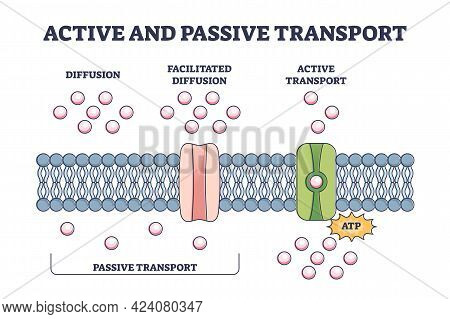 Active And Passive Transport As Molecules Atp Movement In Outline Diagram. Labeled Educational Schem
