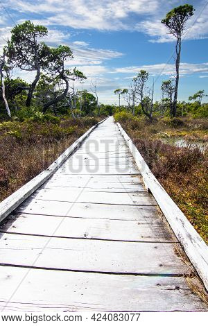 A Wooden Boardwalk Through A Coastal Forest At Pacific Rim National Park Near Tofino Bc On Vancouver