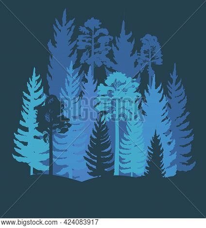 Forest Silhouette. Landscape With Coniferous Trees. Beautiful Night View. Pine And Spruce Trees. Sum