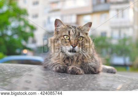Cat Laying On The Roof Of The Car And Wondering With Opened Mouth