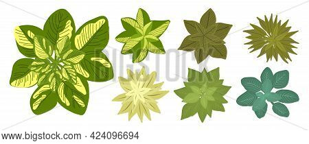 Botanical Elements For A Landscape Plan. Landscaping Constructor. Plants Top View Isolated On White