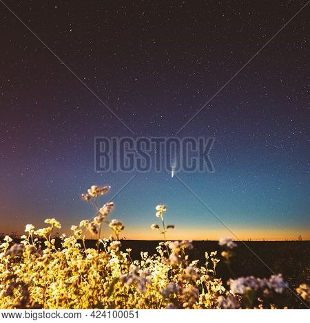 Europe. 18 July 2020. Comet Neowise C 2020 F3 In Night Starry Sky Above Flowering Buckwheat Agricult