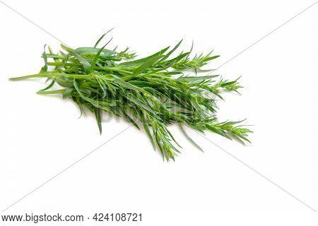 Tarragon Twigs. -aromatic, Tonic Plant. Fresh Shoots Of Green Tarragon.