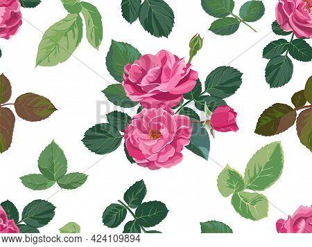 Roses Or Peonies In Blossom, Flowers In Bloom