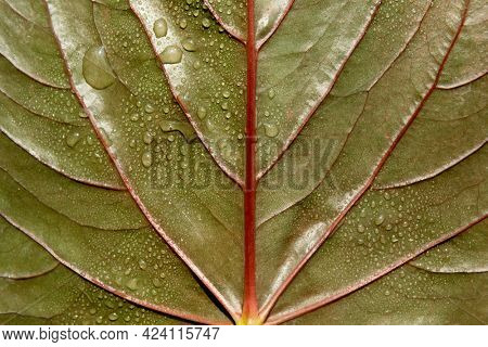 Green leaf textured background with droplets of water