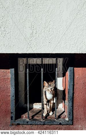 A Street Cat Peeks Through The Metal Grating Of Basement Of House. The Concept Of Imprisonment, Pris
