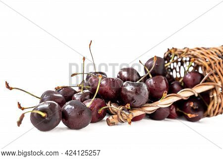 Ripe Sweet Cherries Spilling Out Of Overturned Wicker Basket On White Background