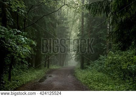 Foggy Dirt Road Through Coniferous Forest, Mystical Landscape