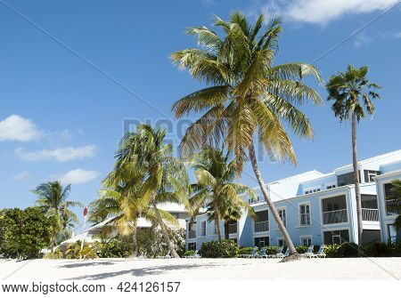 Leaning Palm Trees On Seven Mile Beach On Grand Cayman Island (cayman Islands).
