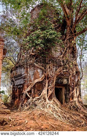 Tree Roots Wrapped Around A Tower Of Prasat Pram Temple Ruins At Koh Ker, Siem Reap, Cambodia