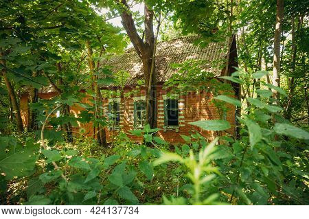 Belarus. Abandoned House Overgrown With Trees And Vegetation In Chernobyl Resettlement Zone. Chornob