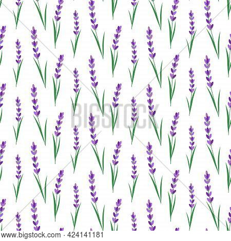 Pattern With Lavender Flowers. Vector Illustration. For Use In Prints, Packaging, Fabrics, The Fashi
