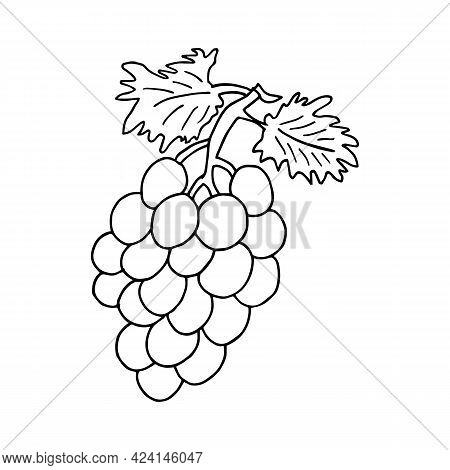 Vector Hand Drawn Bunch Of Grapes Outline Doodle Icon. Object Isolated On White Background. Doodle S