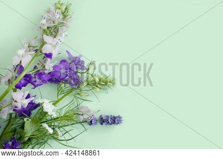 Spring Flowers On A Colored Background Fresh Bloom